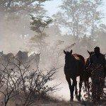 Botswana Motswiri Photo38