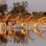 Botswana Motswiri Photo50