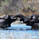 Botswana Motswiri Photo55