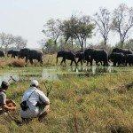 Botswana Motswiri Photo60