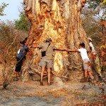 Botswana Motswiri Photo61