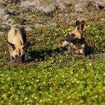 Botswana Motswiri Photo63