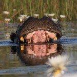 Botswana Motswiri Photo64