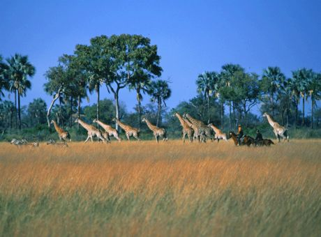 Okavango Safari | Horse Riding Holidays Botswana