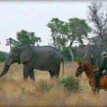 Botswana Okavango Photo12