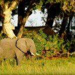 Botswana Okavango Photo19