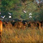 Botswana Okavango Photo21