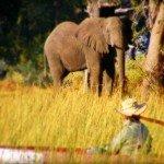 Botswana Okavango Photo22