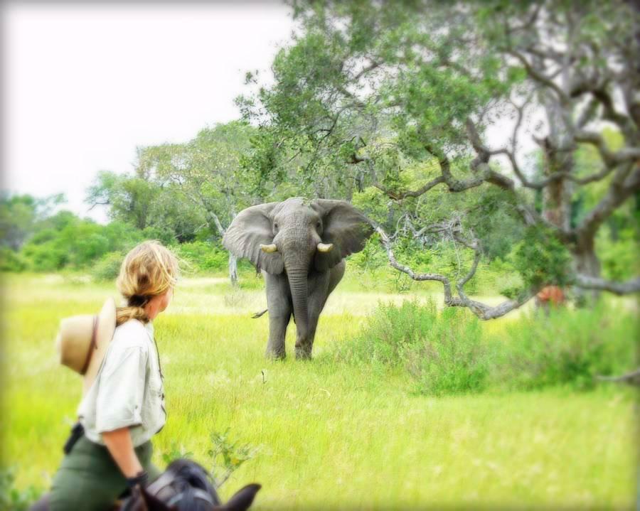 Botswana Okavango Photo23