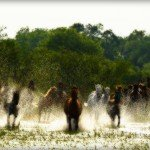 Botswana Okavango Photo29