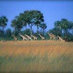 Botswana Okavango Photo30