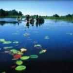 Botswana Okavango Photo31