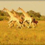 Botswana Okavango Photo32