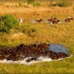 Botswana Okavango Photo6