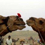 India Rajasthan Bijaipur Photo24