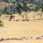 Kenya Lolldaiga Ranch Photo10