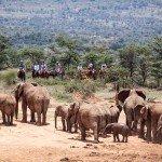 Kenya Lolldaiga Ranch Photo30