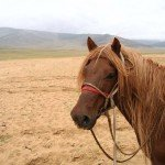 Mongolia Altai Mountains Photo12