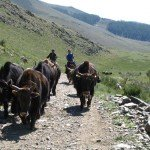 Mongolia Altai Mountains Photo17