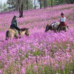 Mongolia Altai Mountains Photo7