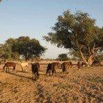 Namibia The Desert Ride Photo1