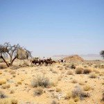 Namibia The Desert Ride Photo17