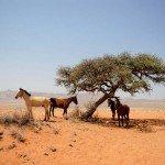Namibia The Desert Ride Photo19