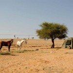 Namibia The Desert Ride Photo22