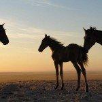 Namibia The Desert Ride Photo9