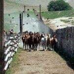 USA Colorado Cattle Ranch Photo3