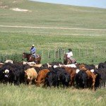 USA Colorado Cattle Ranch Photo8