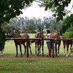 Argentina Buenos Aires Polo Club Photo3