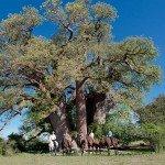 Botswana Kalahari Camp Photo11