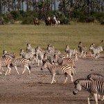 Botswana Kalahari Camp Photo22