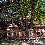 Botswana Kalahari Camp Photo31