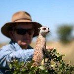 Botswana Kalahari Camp Photo33