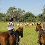 Botswana Kalahari Camp Photo42