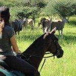 Botswana Kalahari Camp Photo43