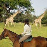 Botswana Kalahari Camp Photo44