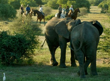Limpopo Safaris | Horse Riding Holidays Botswana