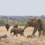Botswana Limpopo Safaris Photo10
