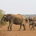 Botswana Limpopo Safaris Photo11