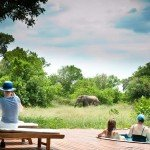 Botswana Limpopo Safaris Photo16