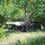 Botswana Limpopo Safaris Photo48