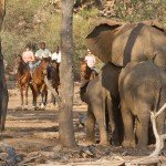 Botswana Limpopo Safaris Photo7