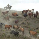 Chile Horse Moving Adventure Photo5