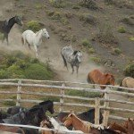 Chile Horse Moving Adventure Photo6