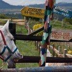 Ecuador Horse Riding Trails Photo35