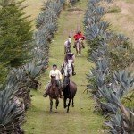 Ecuador Horse Riding Trails Photo36