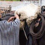 Ecuador Horse Riding Trails Photo37